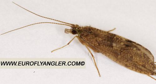 Bộ sưu tập côn trùng 2 - Page 27 S9